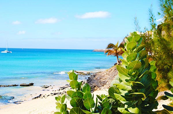 Fuerteventura Foto Landschaft Pflanzen