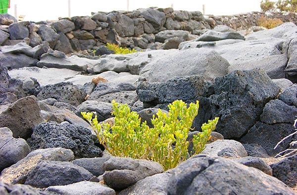 Fuerteventura Foto Landschaft Steine