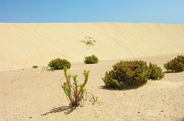 Fuerteventura Foto Strand Corralejo El Jable